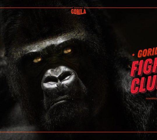 Piąte urodziny Academia Gorila!